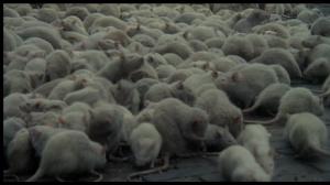 nosferatu rats