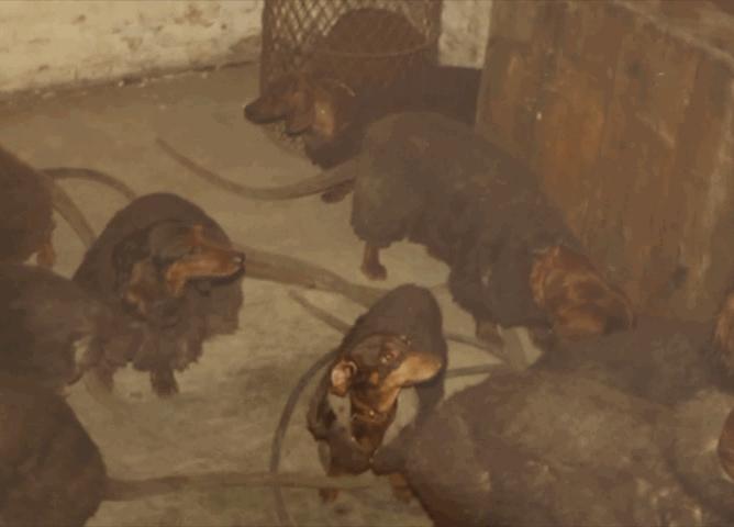 Raquel & Some Rats (5/6)