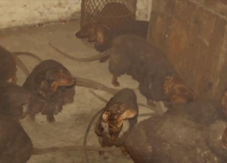 rathunds